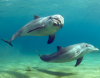 Un beau sourire et un regard innocent de Dolphin devant l'objectif de la caméra