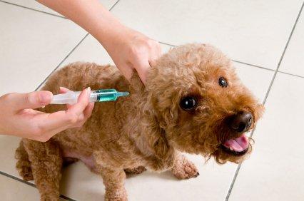 La survaccination
