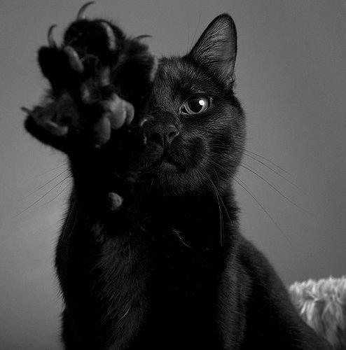 Le dégriffage chez le chat