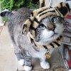 Un chat qui louche