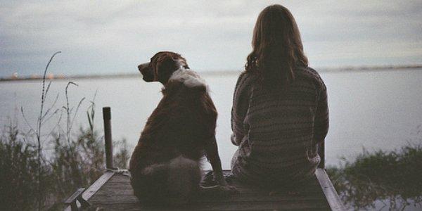 Les sentiments chez les chiens