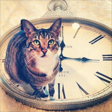 Les effets des changements d'heures chez les animaux