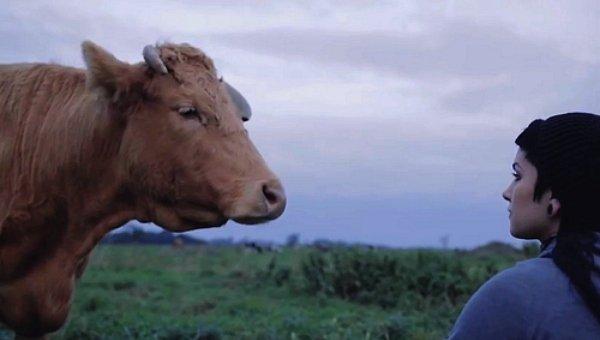 Une vache qui porte un nom donne plus de lait