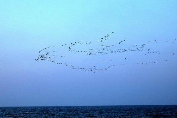 Quand les oiseaux se regroupent