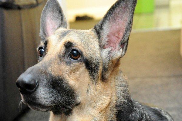 Une chienne sauve un nourrisson abandonné