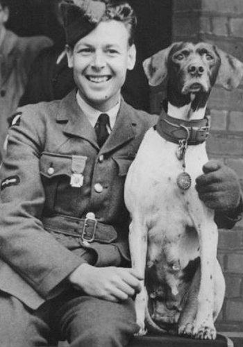 Le seul chien prisonnier de guerre