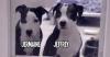Deux chiens dont un aveugle abandonnés