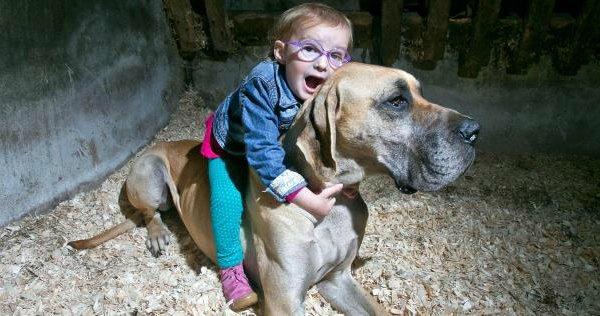 Un chien prédit les crises d'épilepsie d'un enfant