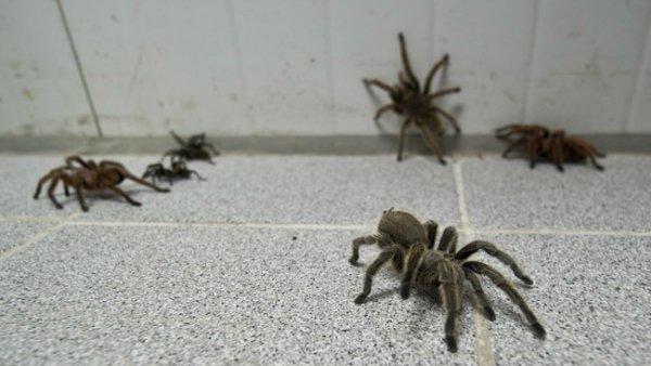 Un homme est retrouvé mort au milieu de ses araignées