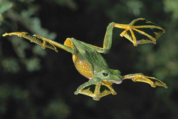 Ils n'ont pas d'ailes et pourtant ils volent