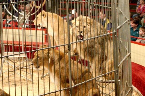 Quelques races d'animaux sauvées des cirques en Belgique