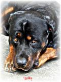 Photo de my-dog-bobby