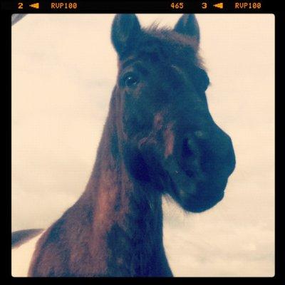 Ma légende ? Mon poney !