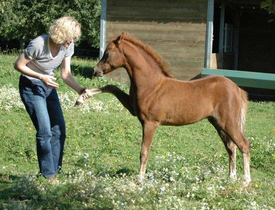 Livres sur le poulain et le jeune cheval