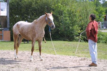 Livres sur l'équitation éthologique