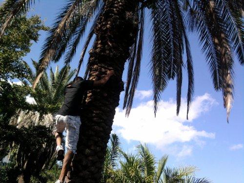 moi entrin grimpé a un arbre