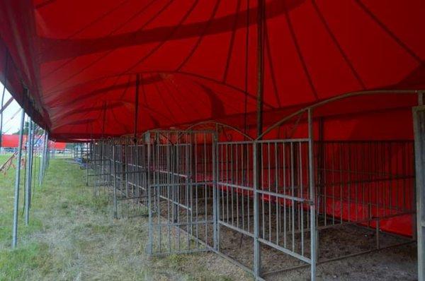 Cirque Nicolas ZAVATTA  DOUCHET Chateaubriant juin 2019. Les animaux sont roi chez eux, aucun animal en box a par pour la nuit et pour la préparation du spectacle. Ça gambade paisiblement, deux nouveau jeunes buffle d'eau sont arrivé au cirque et de nouveaux animaux à venir bientôt.