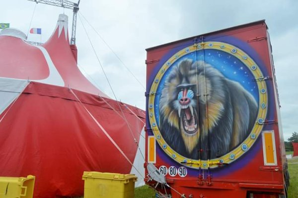 Le cirque Nicolas ZAVATTA DOUCHET Chateaubriant juin 2019