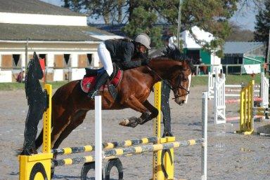 Concours de saut d'obstacle avec Tim