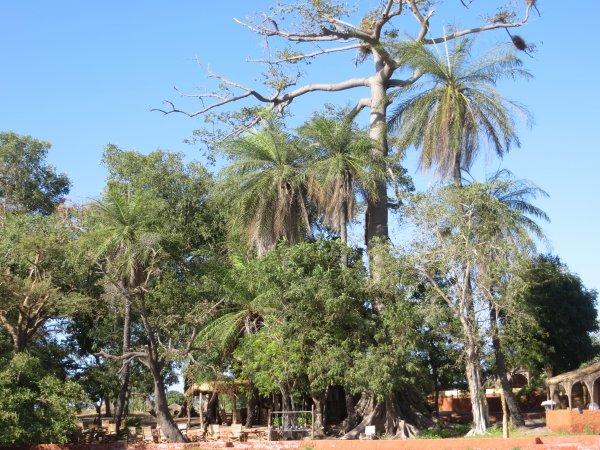 LES VISITES AU SENEGAL