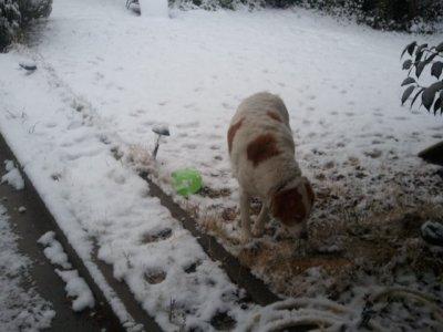 néo sous la neige ! :
