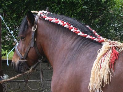 cheval de trait tresse