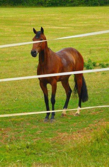 Le cheval apporte ce que l'être humain est incapable de donner