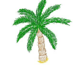 Dessin 27 palmier blog de x everly x - Palmier dessin ...