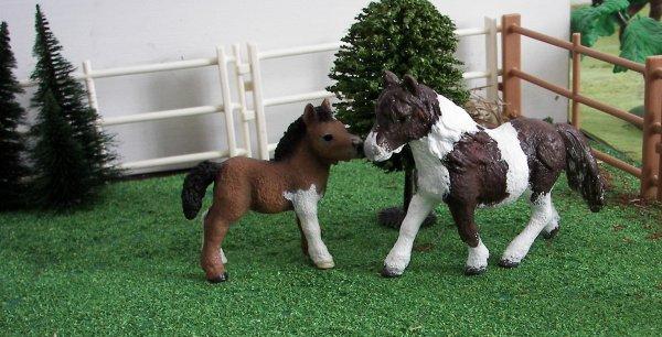 fugue de poneys...