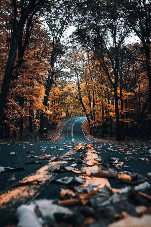 """""""...Je suis ma route, tranquilement, en jouissant des couleurs d'automne qu'elle m'offre....Tout en poursuivant ma route elle me montre que mille et couleurs existent encore...même si ce ne sont plus celles du bonheur!..."""