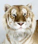 Photo de Contact-Animal