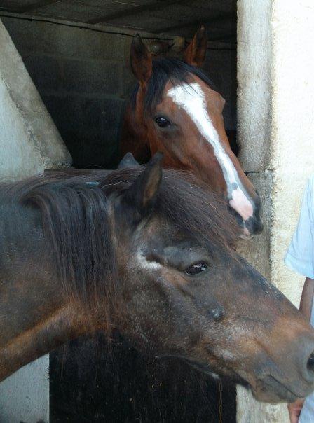 """""""Quand un cheval vient au monde, une étoile s'éteint."""""""