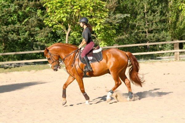 """""""On ne peut prétendre maîtriser un cheval tant qu'on ne se maîtrise pas soi-même."""""""