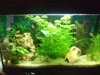 Aquarium 56l