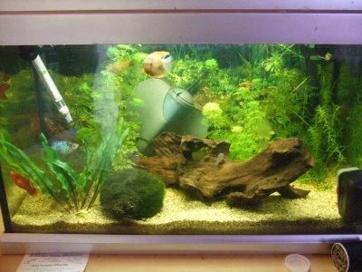 Aquarium 35l