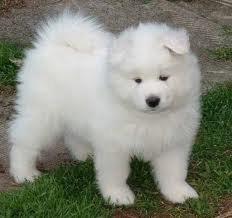 ce chien <3