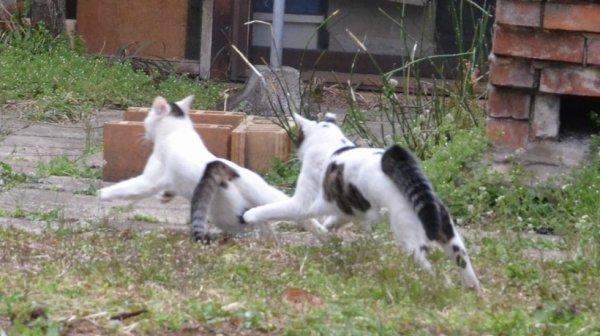 Grand pas de chat
