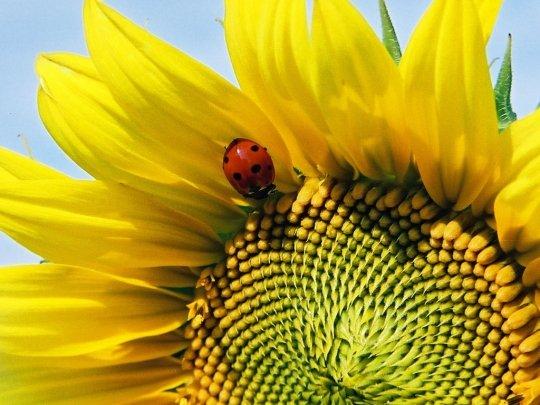 Blog de dream-of-sunflowers-life