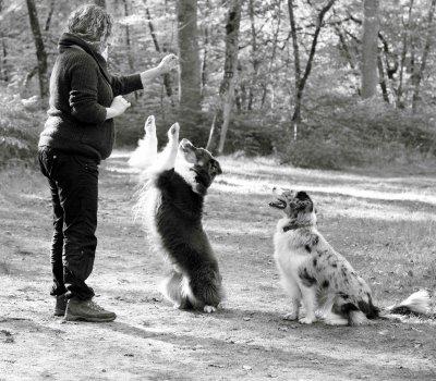 Balade en foret avec les chiens