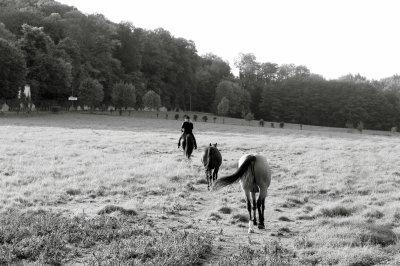 De nouveau à cheval...