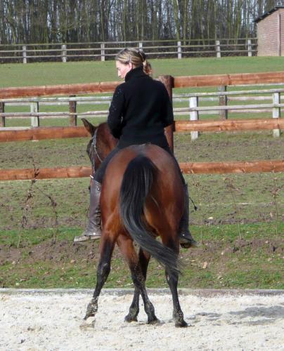 Blog équestre, vers une certaine idée de l'équitation....