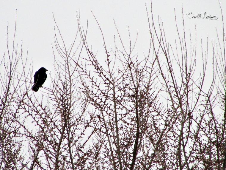 « J'envie la liberté des oiseaux. »
