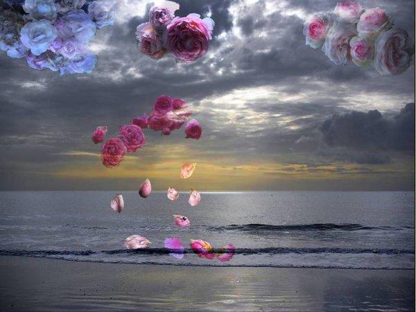 Poussieres de pétales de roses