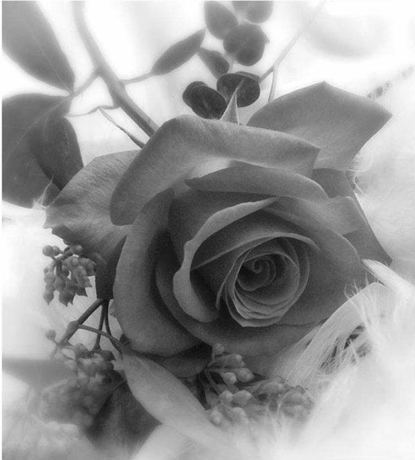 Une rose et tout est dit <3