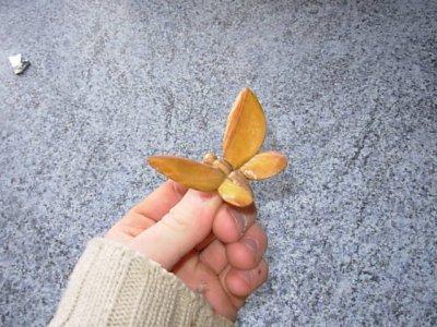 les papillons de bois