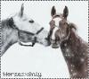Horsesx0nly