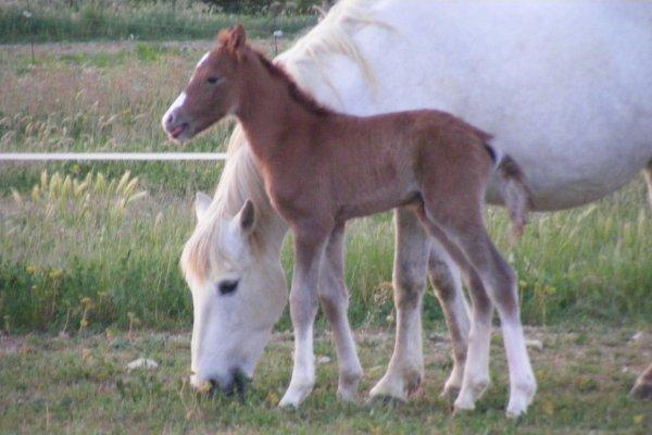 BOULAGNE de GOUJAC est né ce matin le 27/04/2011