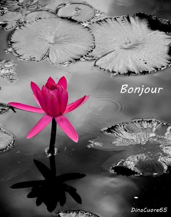 ..kado de mon amie  DinaCuore65....Merci