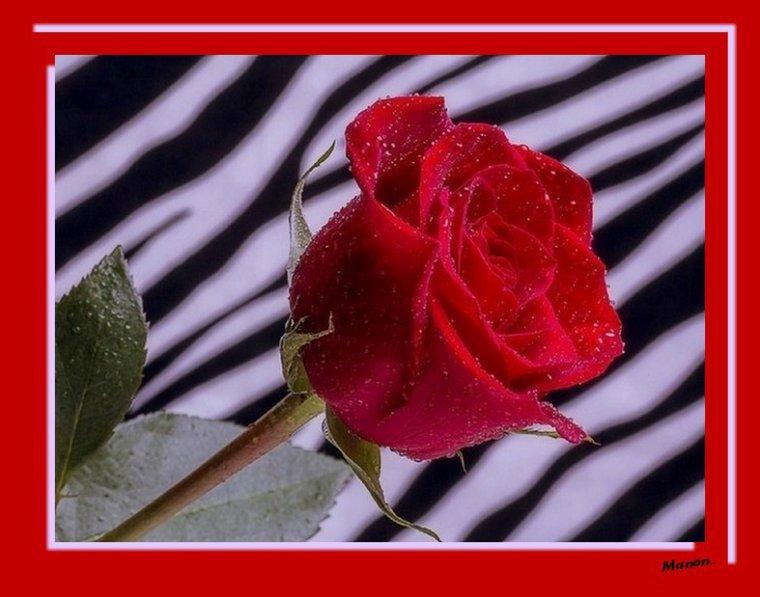 ..kado de mon amie  Manon11000....Merci