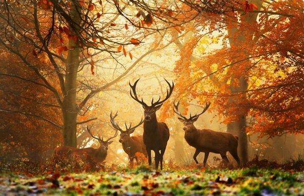 Les lois de la chasse